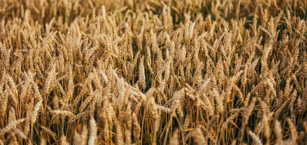 largest agricultural trading company in germany research list